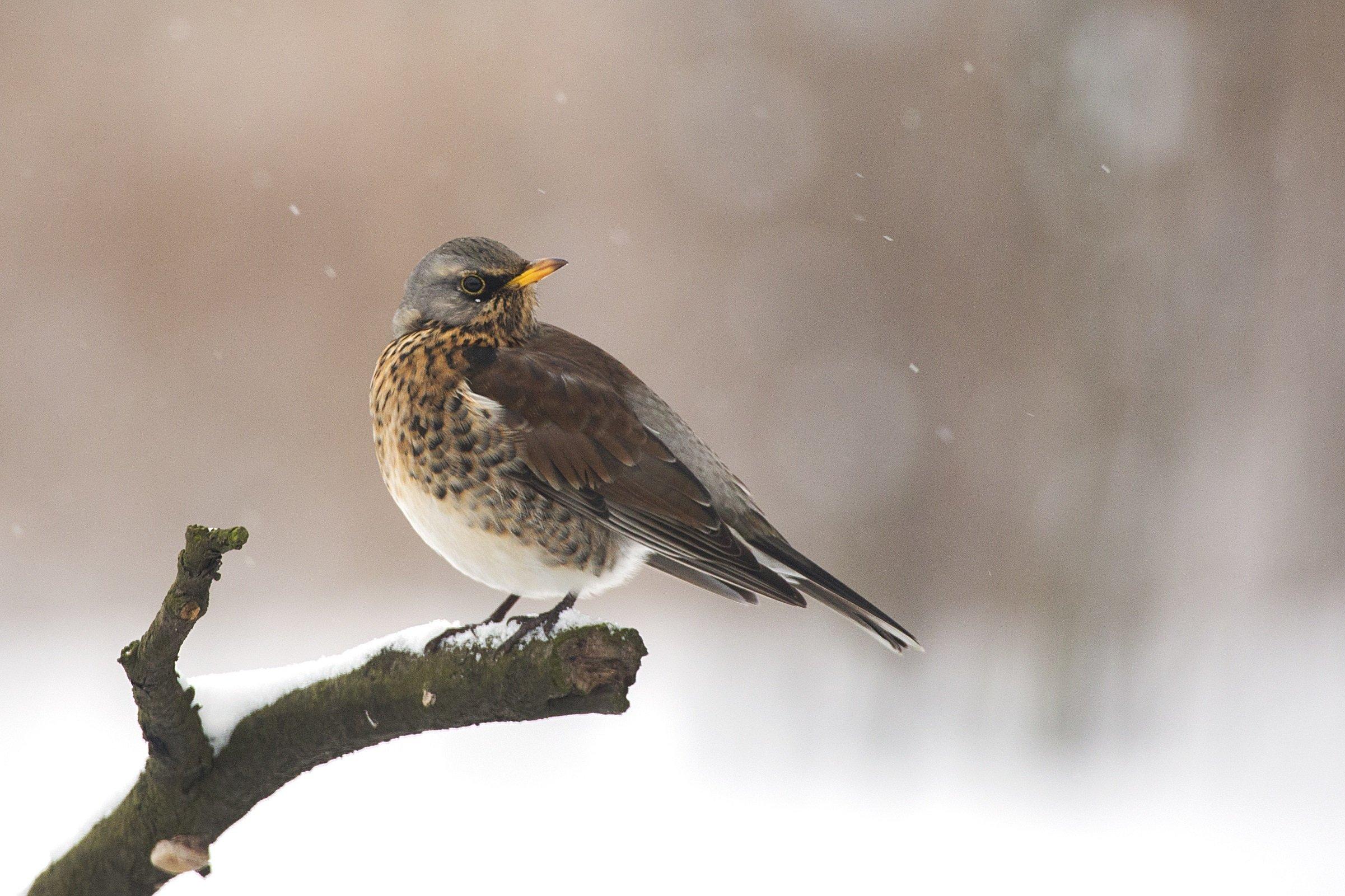A bird perched on a snowy twig