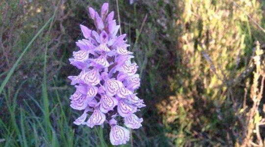 Purple flower amongst grass
