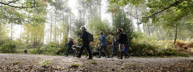 web_pic_Walking_Festival_dog_walk_2016