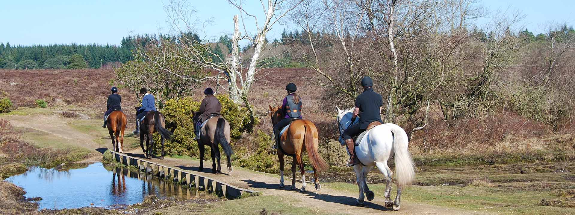 Horse Riding New Forest National Park Authority