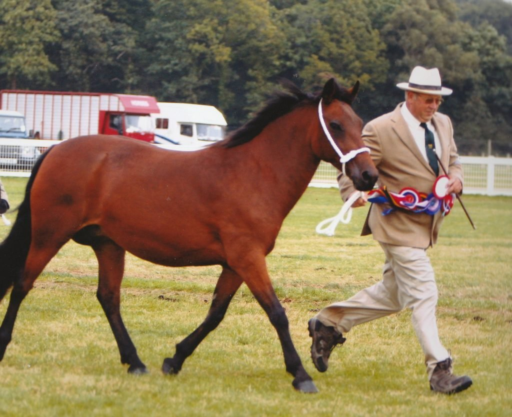 Photo of pony called Brock Brocade and owner James Young