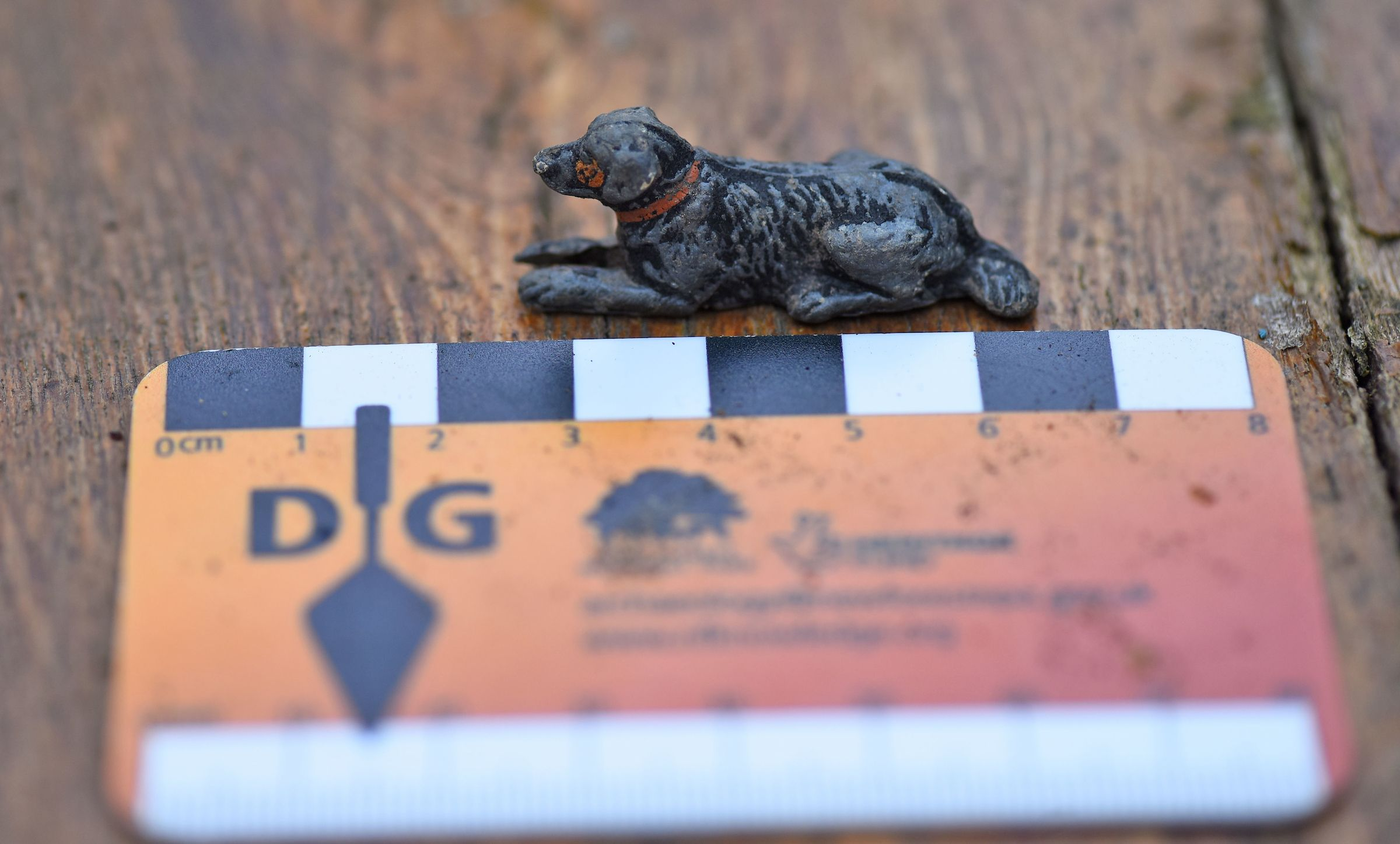 Dig Burley find, small dog