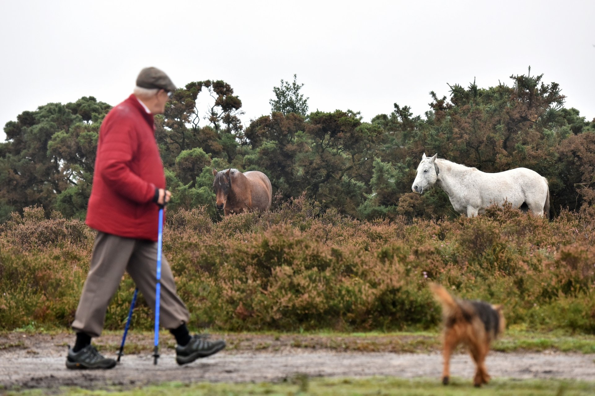 New Forest Walking Festival 2018 Old Railway Wander