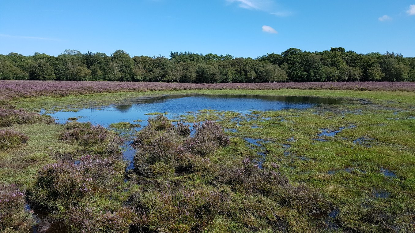 Starpole Pond, near Beaulieu