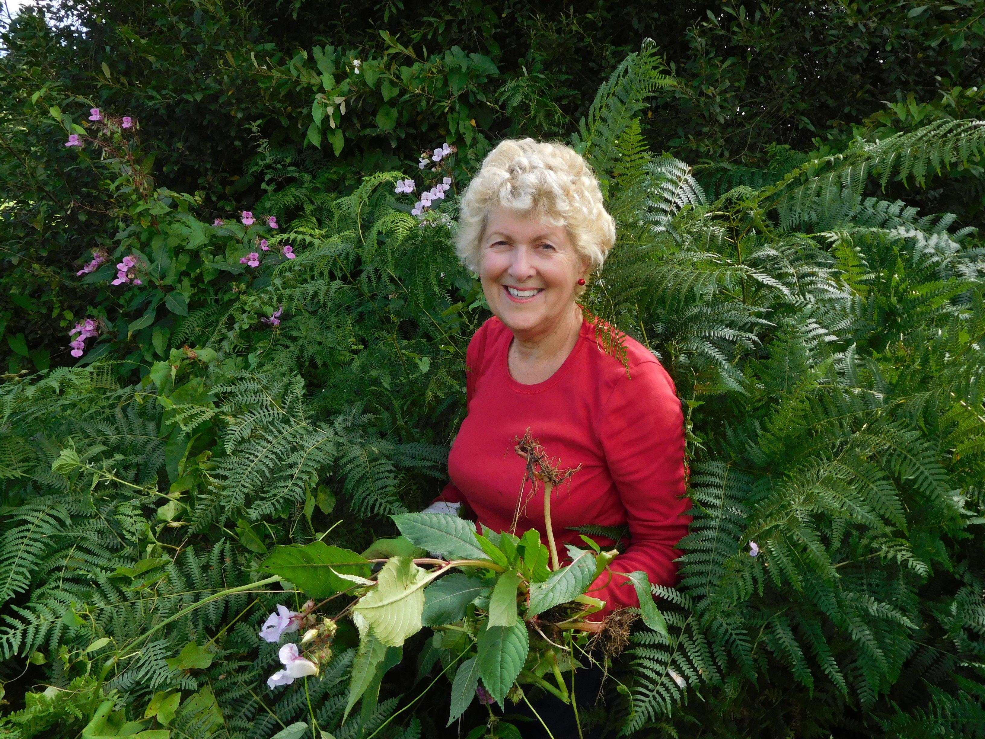 Volunteer Patsy Baverstock himalayan balsam pulling