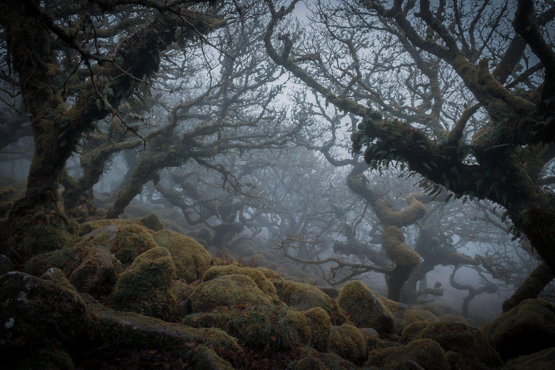 10 Wistmans Wood_Dartmoor_Debra Smitham