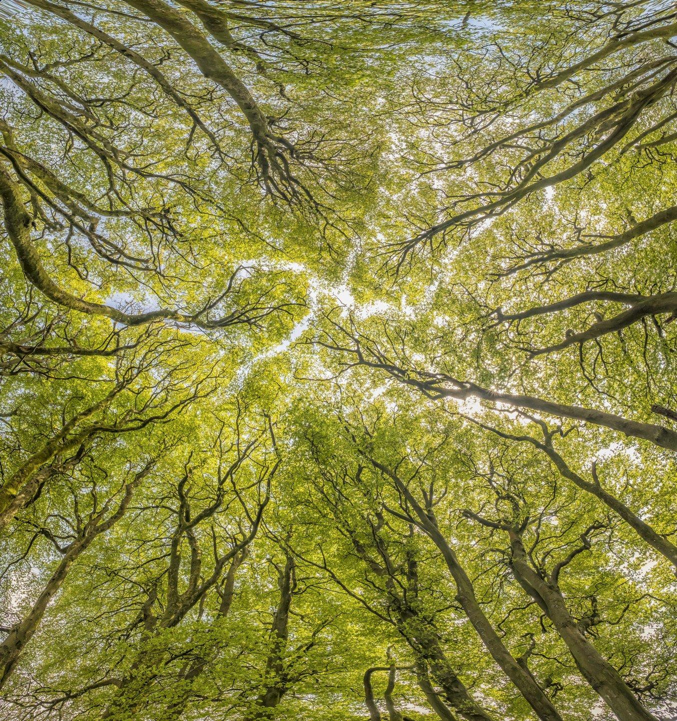 6 Woodland_Exmoor_Shaun Davey web