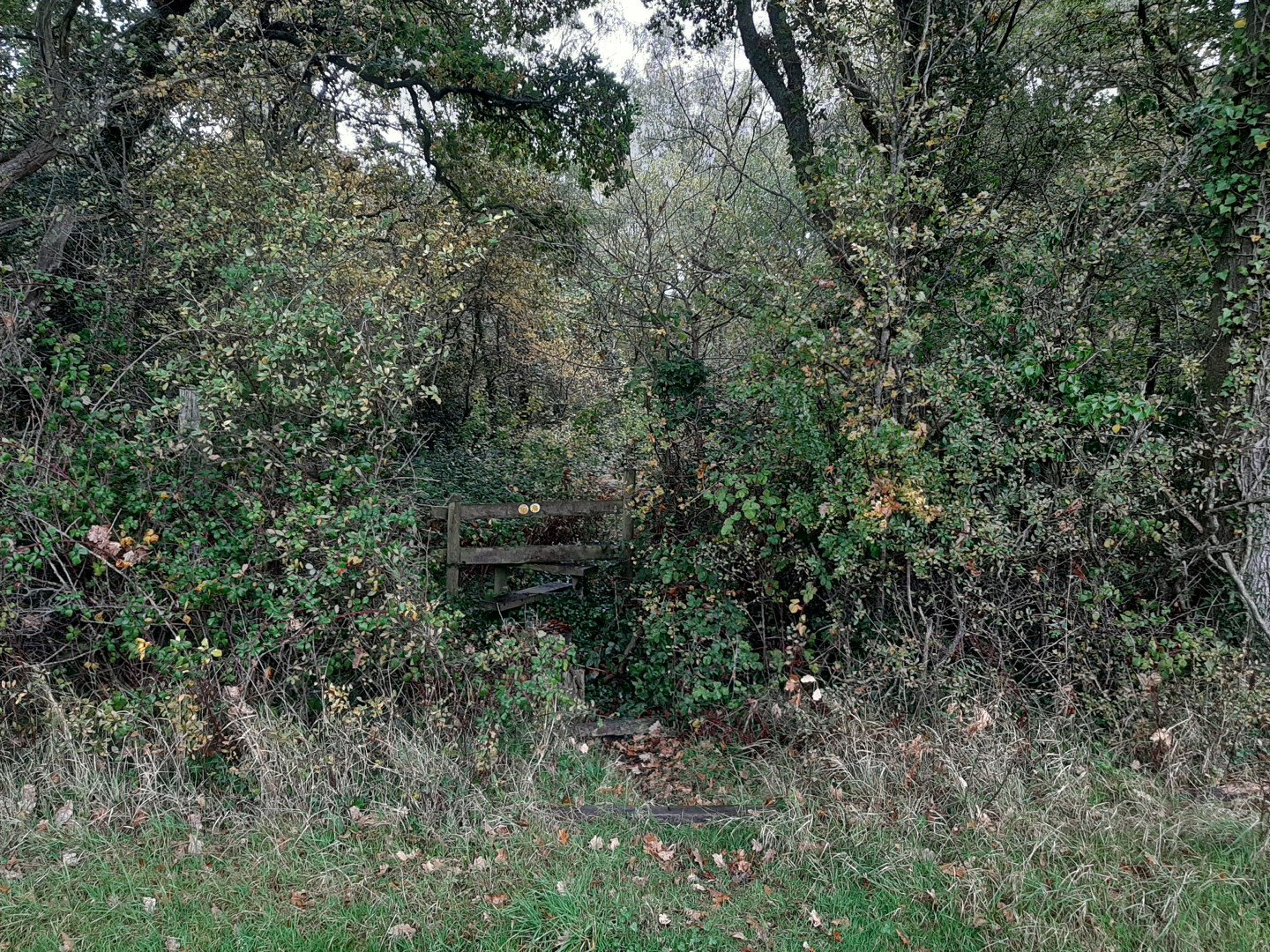 Wooden style in a hedge