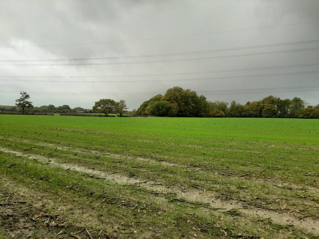 A soggy field