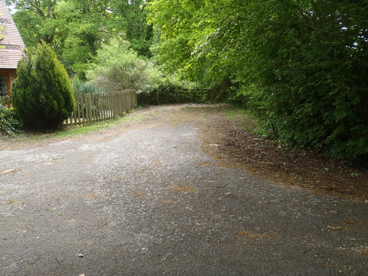 View of a road partially reclaimed by undergrowth and trees