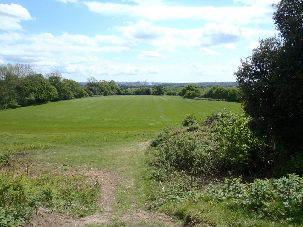 Green grassy field and hedgerows