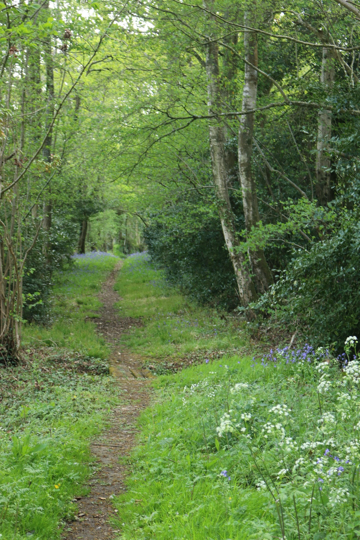 A historic path through woodland