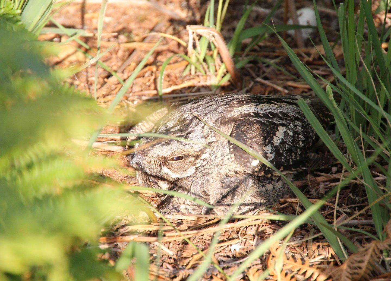 Bird in nest