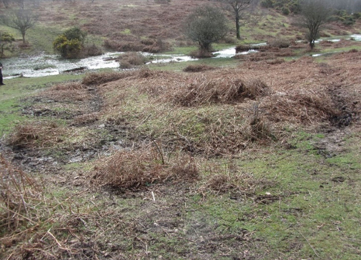 Bank covered in scrub