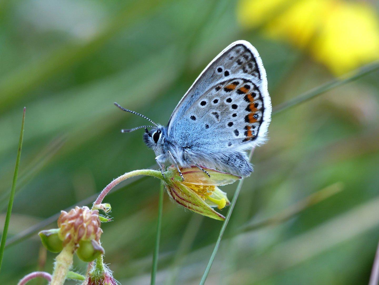 Butterfly on flower stem