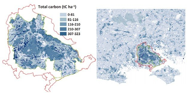 map showing where the New Forest has the best carbon stores