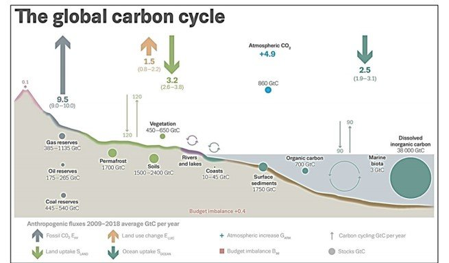 graph showing the global carbon cycle